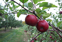 About Our Orchard